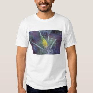 Australia, NT, near Ayers Rock. Springtime bloom Tshirts