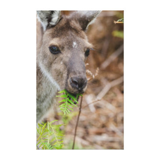 Australia, Perth, Yanchep National Park Canvas Print