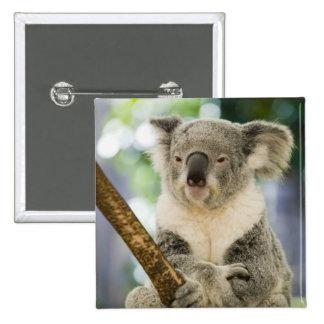Australia, Queensland, Brisbane, Fig Tree 15 Cm Square Badge