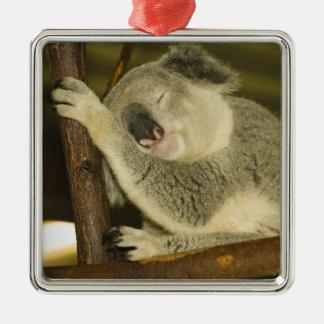 Australia, Queensland, Brisbane. Fig Tree Christmas Ornament