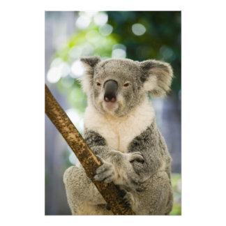 Australia, Queensland, Brisbane, Fig Tree Photo Print