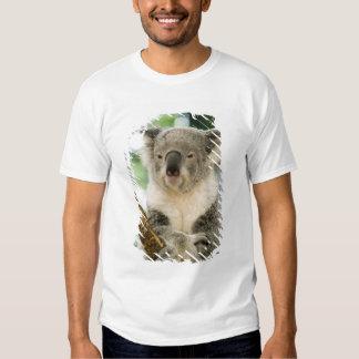 Australia, Queensland, Brisbane, Fig Tree Shirt