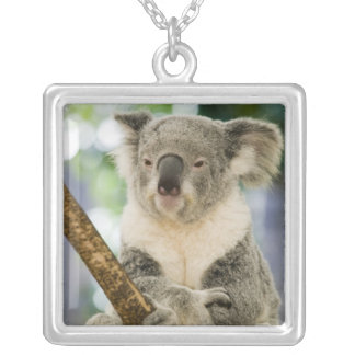 Australia, Queensland, Brisbane, Fig Tree Silver Plated Necklace