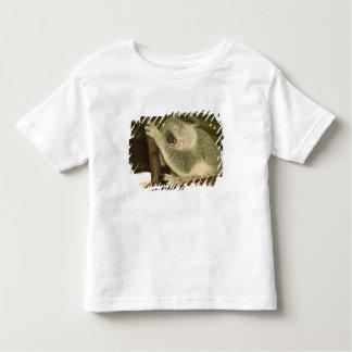 Australia, Queensland, Brisbane. Fig Tree T-shirts