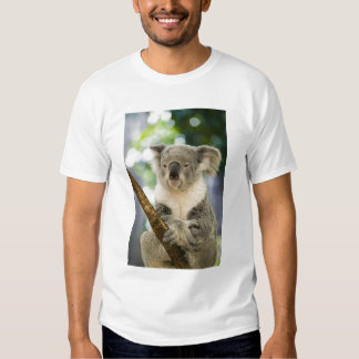Australia, Queensland, Brisbane, Fig Tree Tee Shirt