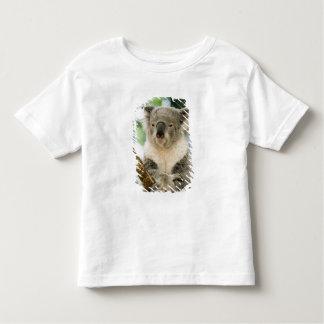 Australia, Queensland, Brisbane, Fig Tree Tshirt