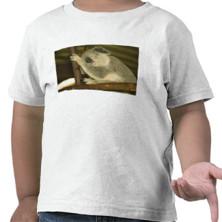 Australia, Queensland, Brisbane. Fig Tree Shirt