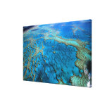 Australia - Queensland - Great Barrier Reef. Stretched Canvas Prints