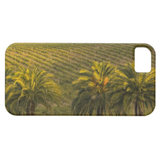 Australia, South Australia, Barossa Valley, iPhone 5 Cases
