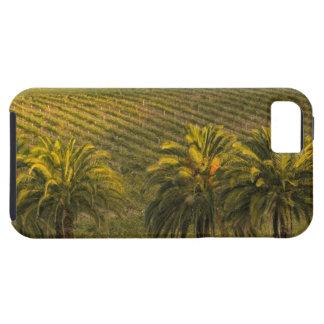 Australia, South Australia, Barossa Valley, iPhone 5 Cover
