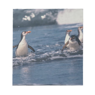 Australia, subantarctic Macquarie Island. Royal Notepads