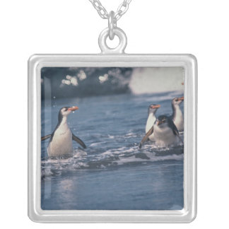 Australia, subantarctic Macquarie Island. Royal Silver Plated Necklace