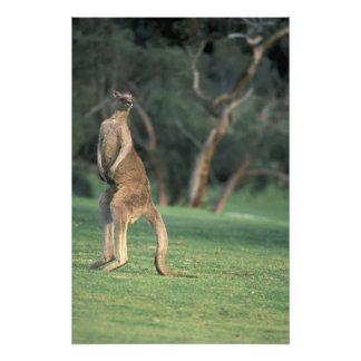 Australia, Vic. Kangaroo on the Anglesea Golf Photo Print