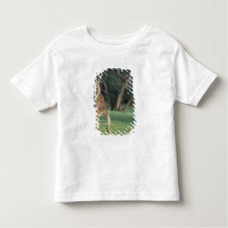 Australia, Vic. Kangaroo on the Anglesea Golf Toddler T-Shirt