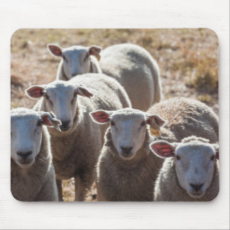 Australia, Victoria, Yarra Valley, sheep farm Mouse Pad