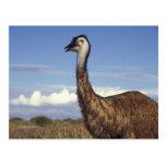 Australia, Western Australia. Emu (Dromaius Postcards