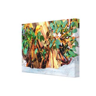 Australia Wild Flora Gum Buried in Snow Canvas Print