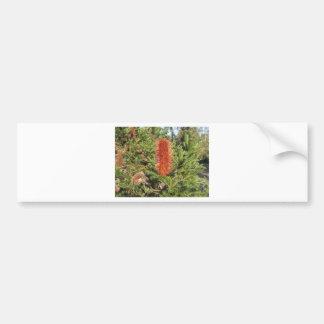 Australian Banksia Bumper Stickers