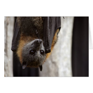 Australian Bat Card