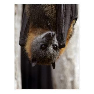 Australian Bat Postcard