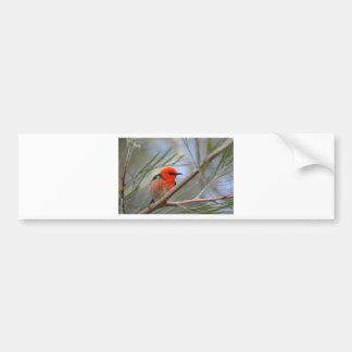 Australian Birds Bumper Sticker