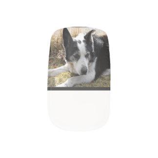 australian-cattle-dog-2 fingernail transfers