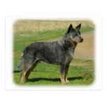 Australian Cattle Dog 9F060D-06 Postcard