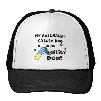 Australian Cattle Dog Agility Dog Hat
