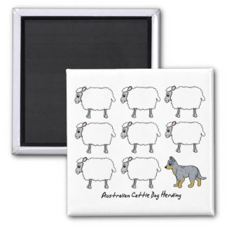 Australian Cattle Dog Herding Sheep Magnet