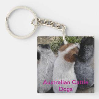 Australian Cattle Dog Keychain Acrylic Key Chain