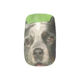 Australian Cattle Dog Minx ® Nail Art