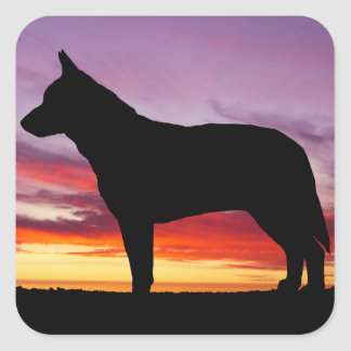 Australian Cattle Dog Square Sticker