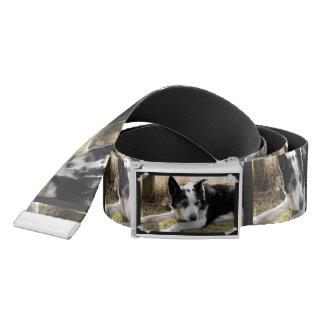 Australian Cattle Dog Belt