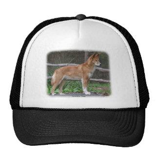 Australian Dingo 9Y209D-268 Hat