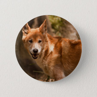 Australian Dingo badge