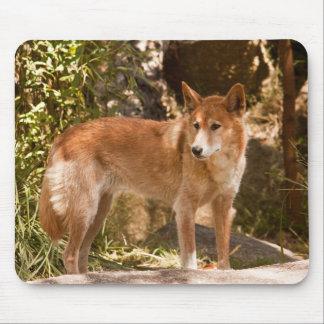 Australian dingo mouse mat