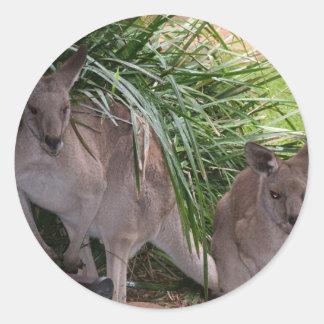 Australian Eastern Grey Kangaroo Classic Round Sticker