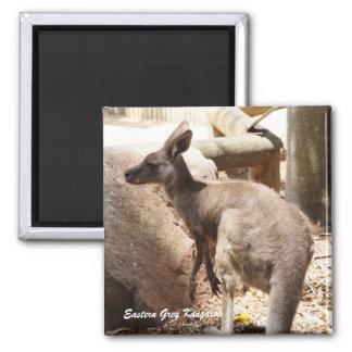 Australian Eastern Grey Kangaroo Magnet