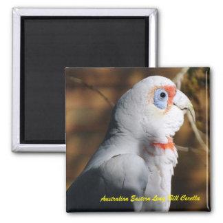 Australian Eastern Long Bill Corella Magnet