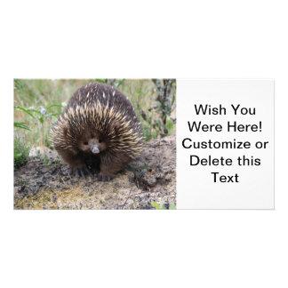 Australian Echidna Cute Animal Photo Photo Card