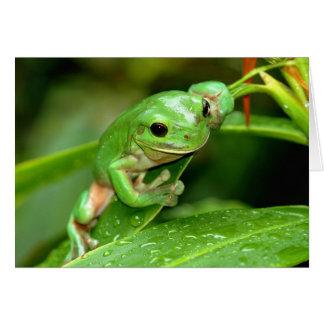 Australian Green Tree Frog photo greeting card