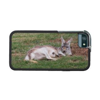 Australian Kangaroo and Baby Joey Wildlife Photo iPhone 5/5S Cover
