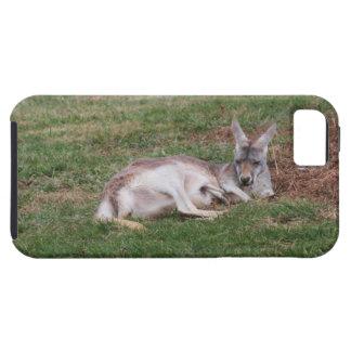 Australian Kangaroo and Baby Joey Wildlife Photo iPhone 5 Cover