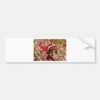 Australian Kangaroo Paw flower in bloom 2 Bumper Sticker