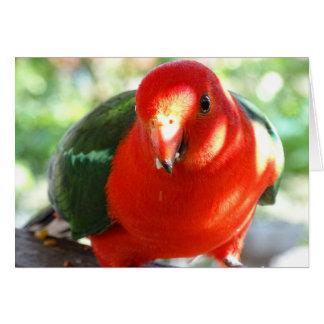 Australian King Parrot Card