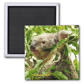 Australian Koala Magnet
