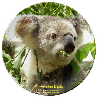 Australian Koala Porcelain Plate