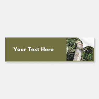 Australian Kookaburra Kingfisher Family Bumper Stickers