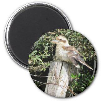 Australian Kookaburra Kingfisher Family Refrigerator Magnets