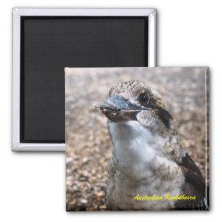 Australian Kookaburra Magnet